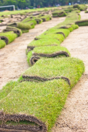 Rolls of green grass, laying in progress Stock Photo - 16482611