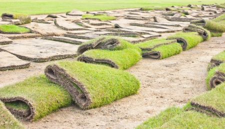 Rolls of green grass, laying in progress  Stock Photo - 16482610