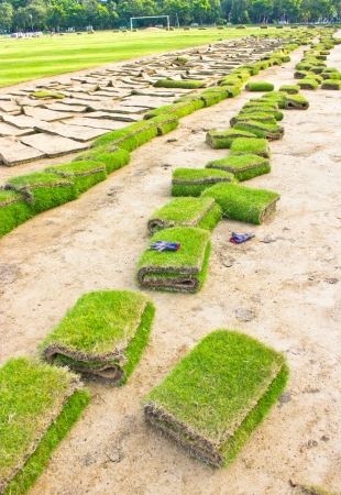Blue gloves on rolls of green grass, laying in progress. Stock Photo - 17104724
