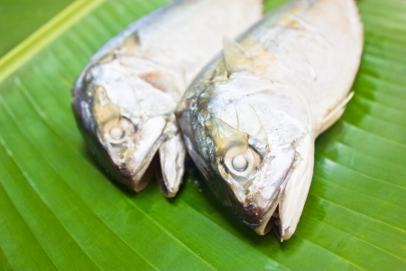 Mackerels with green banana leaf  photo