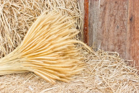 fascicle: Sheaf of wheat on hay
