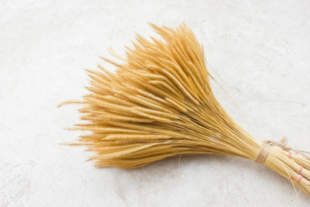 fascicle: Sheaf of wheat on ground
