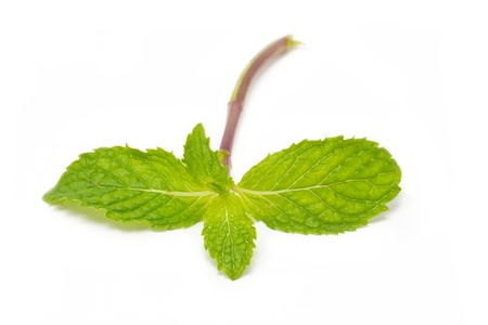 Peppermint isolated on white background   photo