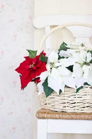 Christmas flowers with basket on the chair. photo