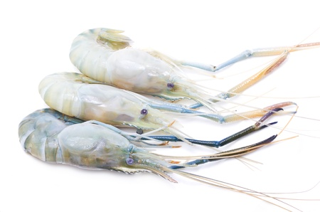 Fresh river shrimp isolated on white  Stock Photo - 20441773