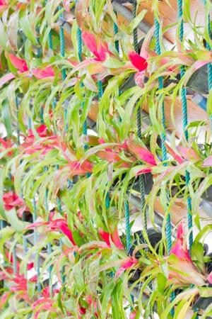 guzmania: Bromeliad vertical gardening