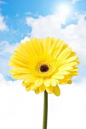 brilliance: Yellow gerbera flower (Brilliance). Stock Photo
