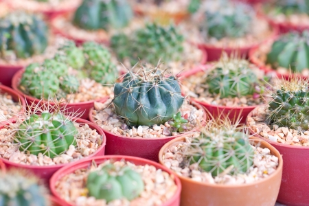 Small cactus plant pot focusing at the middle  photo