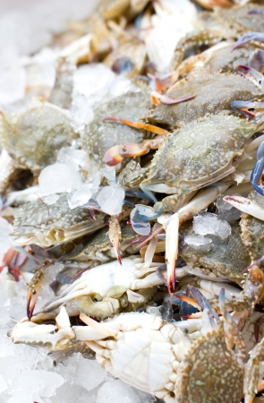 pike place: Fresh crab with ice