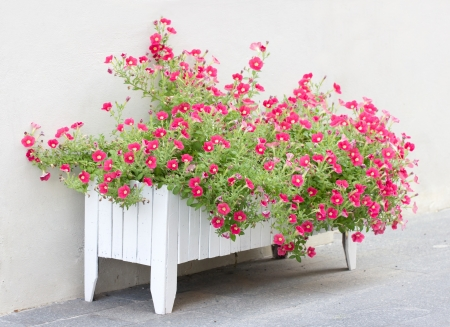 flower boxes: Petunia flowers in wooden pot