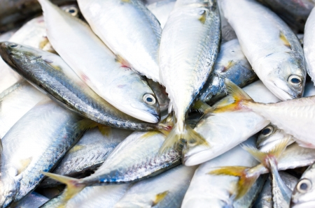 iodine: Fresh raw mackerel fish in market