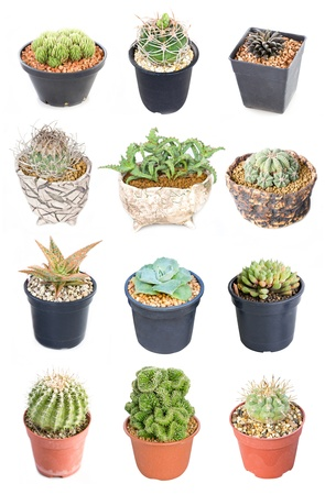 potted plant cactus: Set of 15 variety Cactus potted plants isolated on white