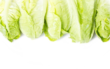 Baby Cos lettuce frame  photo