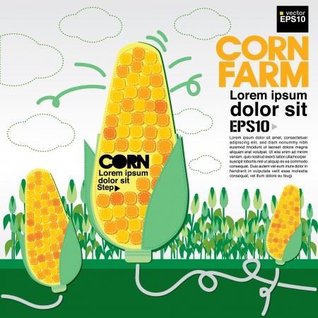 sweet corn: Corn farm illustration  Illustration