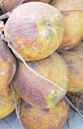 bunch up: Ripe Coconut Fruit Bunch Close up Shot. Stock Photo