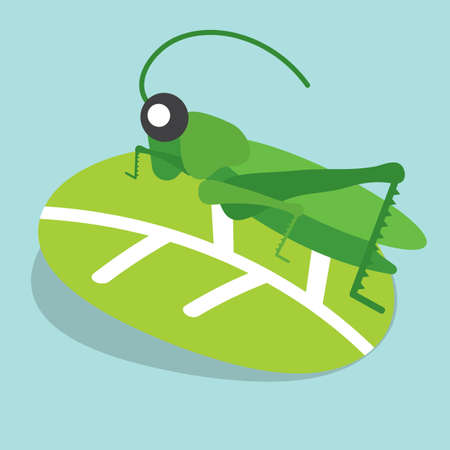 Grasshoppers Perched on The Leaves Vector Illustration.