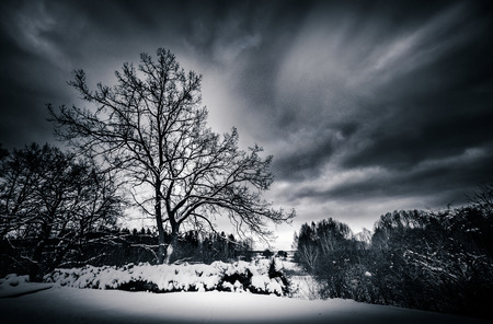 Cold winds in winter landscape Фото со стока