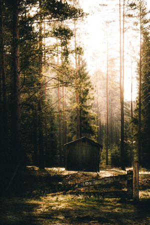 A single cabin deep inside the dense forest