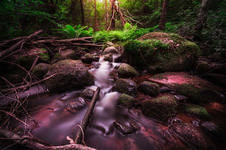 Vibrant colors in the deep ravine by the running waters Фото со стока