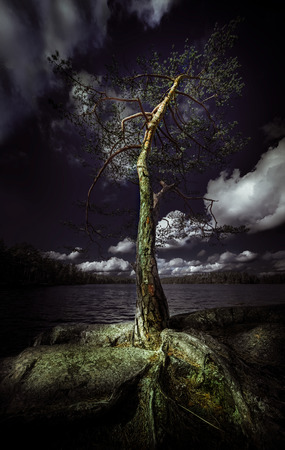 One single strong tree rises to the sunlight by the lake