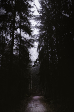 Dark walk in the dense forest at morning photo