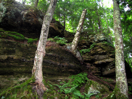 rooted: Stark rotting trees rooted in mossy outcroppings