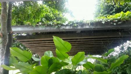 verandah: Green plants overhanging a verandah