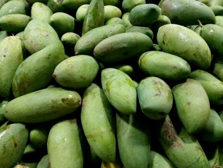 unripe: Unripe green mangos