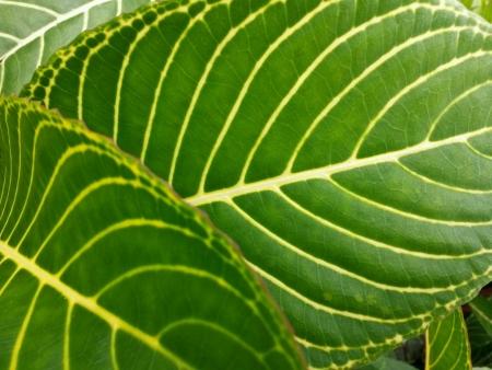 veiny: Veiny leaves