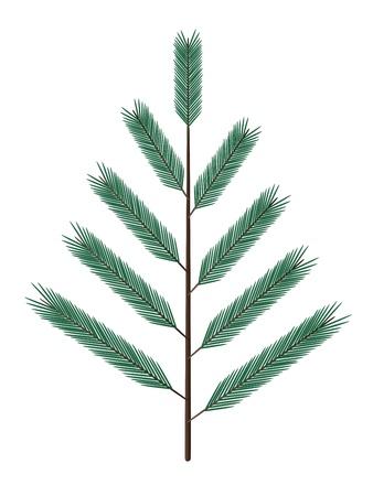 pine boughs: fir twig