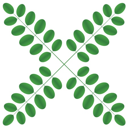 acacia: Acacia twigs - star
