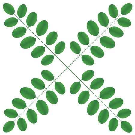 langosta: Ramitas de acacia - estrella