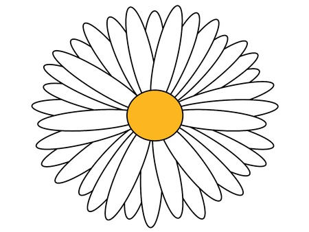marguerite: daisy isolated Illustration
