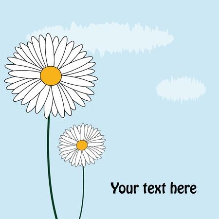 marguerite: daisy card Illustration