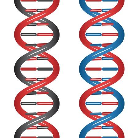 cromosoma: Seamless vector de ADN Vectores