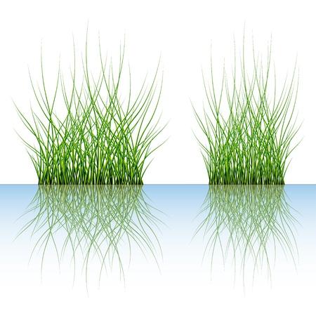 vector grass Stock Vector - 11504988