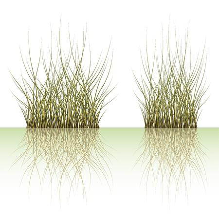 vector grass Stock Vector - 11504989