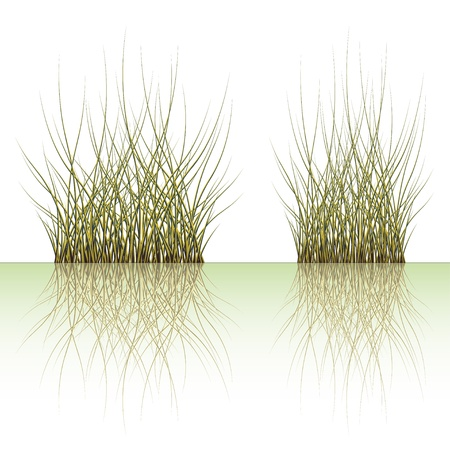 reflection of life: vector grass