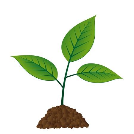 sprig: vector young tree