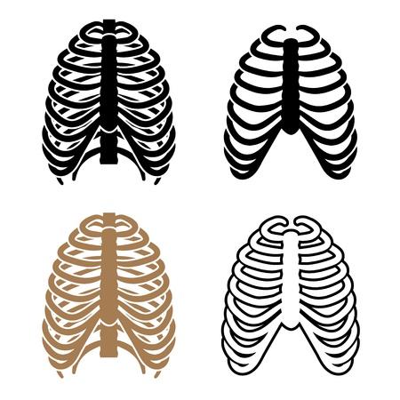 squelette: vecteur des symboles de la cage thoracique de l'homme