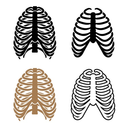 rib: vector humanos símbolos caja torácica