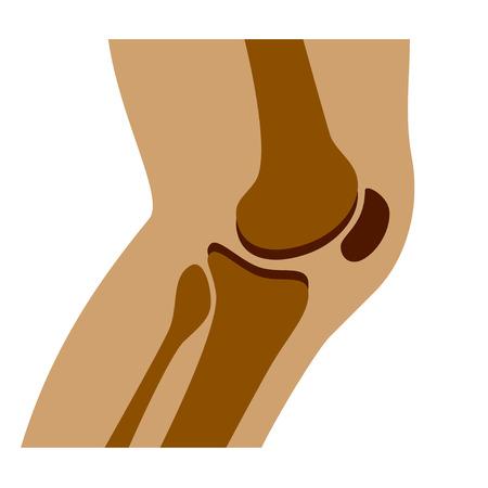 vector de rodilla humana vista lateral conjunta