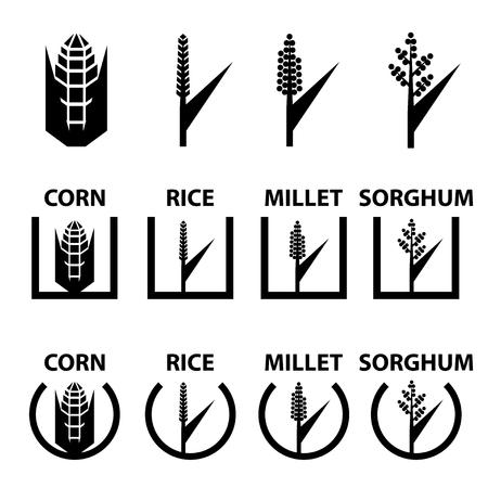 mazorca de maiz: maíz vector de símbolos de cereales de arroz mijo sorgo
