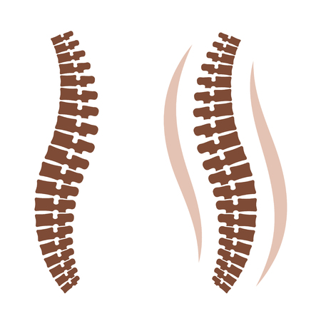 Human spine silhouettes vector