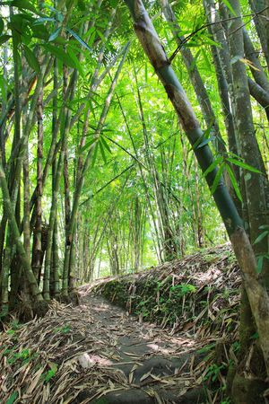 Bamboo Forest Stock Photo - 7552852