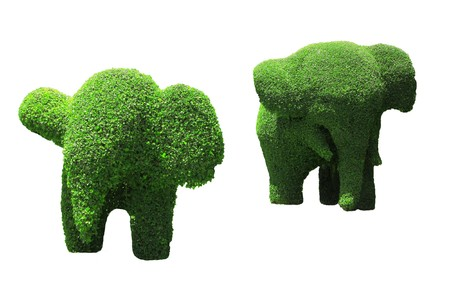 Elephant topiary with white background isolated