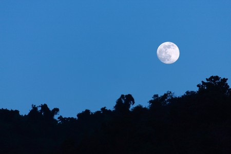 Night time with moon and tree silhouette Stock Photo - 7584605