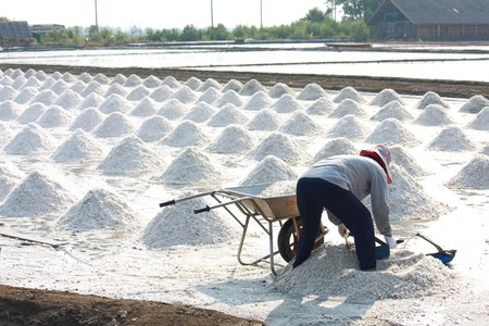 Collecting salt on traditional way on the salt field in Samut Songkham,Thailand Stock Photo