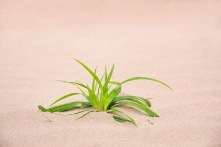 desolate: grass on sand in nature, feeling desolate Stock Photo