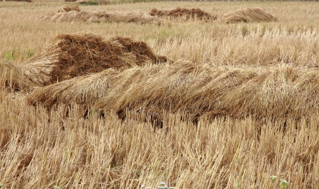 straw heap on dry field photo